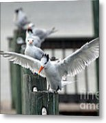 Ocean Tides Series Metal Print by Terry Troupe