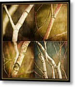 Branching Out Metal Print by Bonnie Bruno