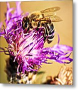 Honey Bee  Metal Print by Elena Elisseeva