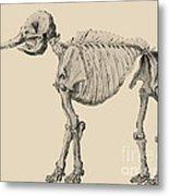 Mastodon Skeleton Metal Print by Science Source