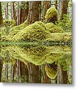 Swamp Metal Print by David Nunuk