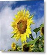Close Up Of Sunflower Metal Print by Bernard Jaubert