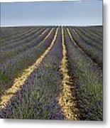 Field Of Lavender. Provence Metal Print by Bernard Jaubert