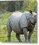 Indian Rhinoceros Metal Print by Tony Camacho