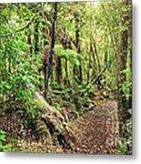 Native Bush Metal Print by MotHaiBaPhoto Prints