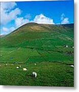 Slea Head, Dingle Peninsula, Co Kerry Metal Print by The Irish Image Collection