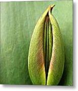 Tulip Metal Print by Odon Czintos