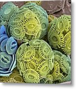 Calcareous Phytoplankton, Sem Metal Print by Steve Gschmeissner