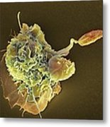 Macrophage Attacking A Foreign Body, Sem Metal Print by
