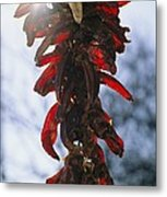 A Bunch Of Red Peppers Hung To Dry Metal Print by Stephen St. John