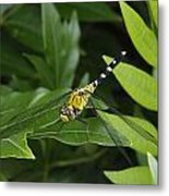 A Dragonfly Resting On A Leaf Metal Print by George Grall