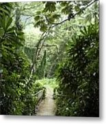 A Flooded Path At Manoa Falls Metal Print by Stacy Gold