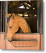 A Horse In Its Stable Metal Print by Stacy Gold