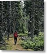 A Lone Hiker Enjoys A Wooded Trail Metal Print by Tim Laman
