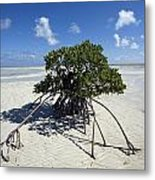 A Lone Mangrove Tree On A Sand Spit Metal Print by Scott S. Warren
