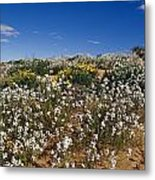 A Riot Of Wild Stock Flowers And Annual Metal Print by Jason Edwards