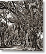 A Stroll Through Time Monochrome Metal Print by Steve Harrington