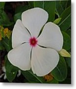A White Star With A Red Center Metal Print by Chad and Stacey Hall