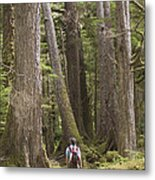 A Woman Walks In Old Growth Forest Metal Print by Taylor S. Kennedy