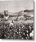 African Americans Picking Cotton Metal Print by Everett