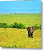 African Elephant In The Wild Metal Print by Anna Om