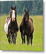 American Paint Stallion And Mare Metal Print by Karon Melillo DeVega