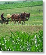 Amish At Work Metal Print by Dottie Gillespie