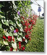Amish Horse And Buggy On Flowered Country Road Metal Print by Jeremy Woodhouse