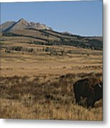 An American Bison Standing Metal Print by Tom Murphy