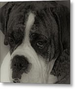 Angelic Boxer Metal Print by DigiArt Diaries by Vicky B Fuller