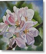 Apple Blossoms Metal Print by Sharon Freeman