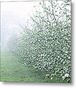 Apple Orchard Metal Print by Jeremy Walker