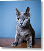 Apprehension Metal Print by Square Dog Photography