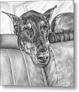 Are We There Yet - Doberman Pinscher Dog Print Metal Print by Kelli Swan