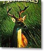 Arkansas White Tailed Deer Metal Print by Flo Karp