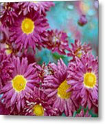 Asters Metal Print by Marcio Faustino
