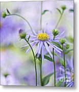 Autumn Asters Metal Print by Jacky Parker