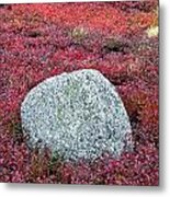 Autumn Blueberry Field Metal Print by John Greim