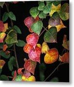 Autumn Color Metal Print by Brenda Bryant