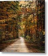 Autumn Forest 3 Metal Print by Jai Johnson