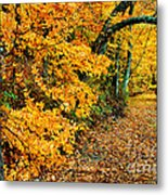 Autumn In Tennessee Metal Print by Cheryl Davis