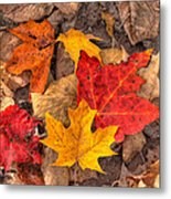 Autumn Leaves Metal Print by Matt Dobson