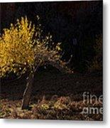 Autumn Light Metal Print by Mike  Dawson