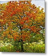 Autumn Maple Tree Metal Print by Elena Elisseeva