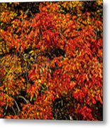 Autumn Red Metal Print by Garry Gay