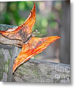 Autumn - The Year's Loveliest Smile Metal Print by Christine Till