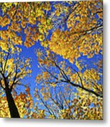 Autumn Treetops Metal Print by Elena Elisseeva