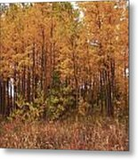 Awesome Aspens Metal Print by Carol Cavalaris