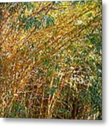 Bamboo Stand Please Buy Me Metal Print by Michael Clarke JP