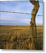 Barbed Wire Fence Along Dry Creek Road Metal Print by Gordon Wiltsie